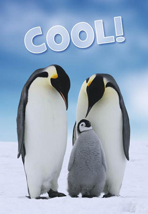 "Pinguins ""Cool!"""