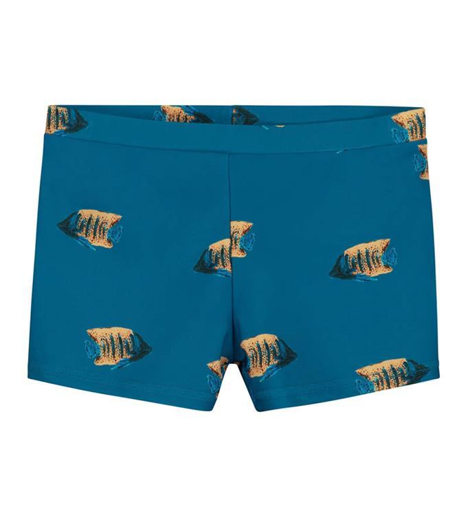 Zwemboxer Moonfish